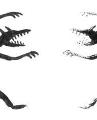 Oeil-pour-oeil-int